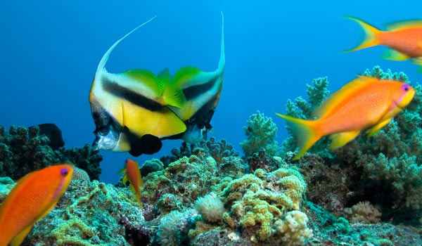 destination fiji diving