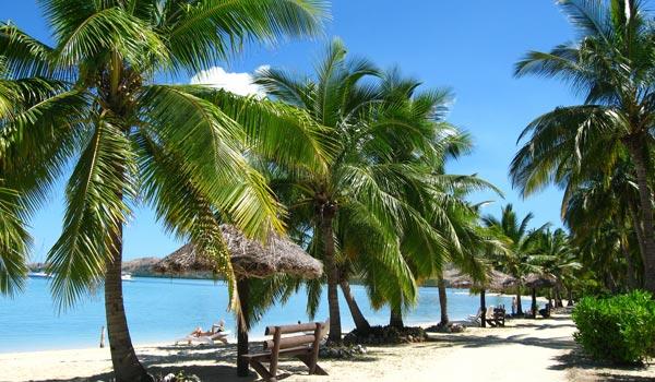 Sailing past Fijian palm trees