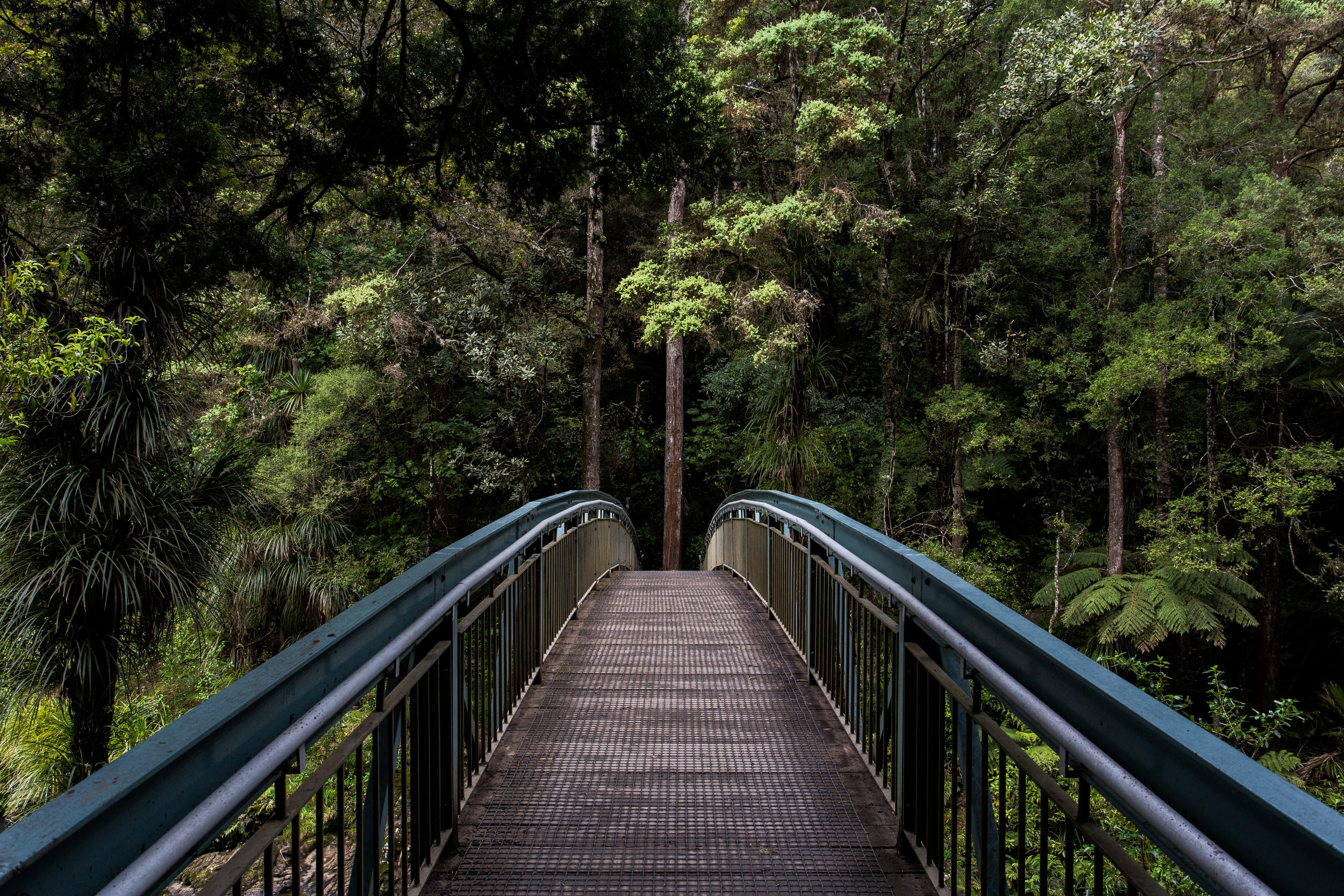 hiking whangarei
